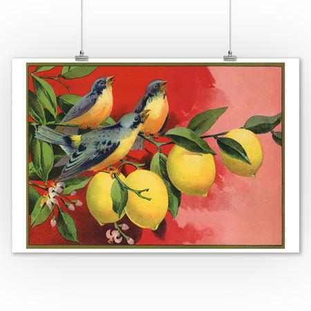 Birds on Lemon Branch - Citrus Crate Label (9x12 Art Print, Wall Decor Travel Poster) Antique Label Art