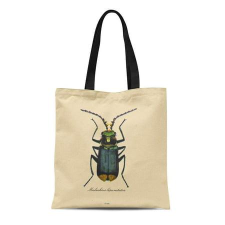 KDAGR Canvas Tote Bag Taxonomy Vintage Insects Entomology Reversible Biology Nature Customizable Malachite Reusable Handbag Shoulder Grocery Shopping Bags