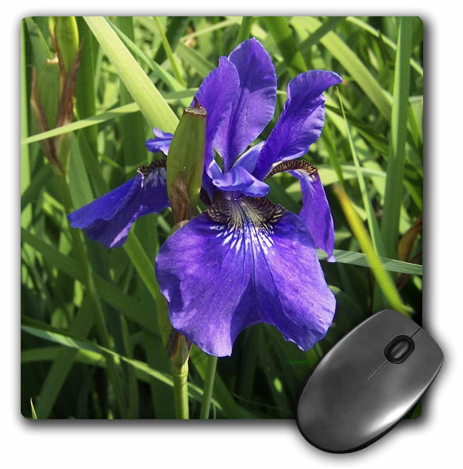 3dRose blue iris, Mouse Pad, 8 by 8 inches
