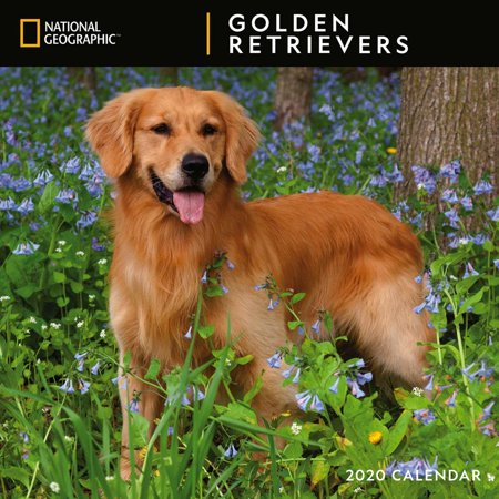 Calendars Golden Retrievers National Geographic Wall Calendar FSC Certified Paper with Full Color Pages Retriever 2010 Calendar