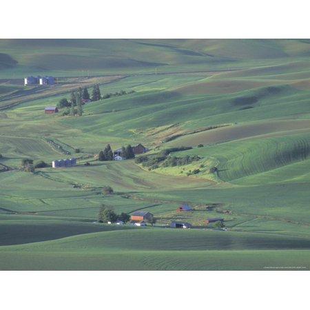 Contour Farming on Rolling Hills of the Palouse Region, near Colfax, Washington, USA Print Wall Art By Adam Jones