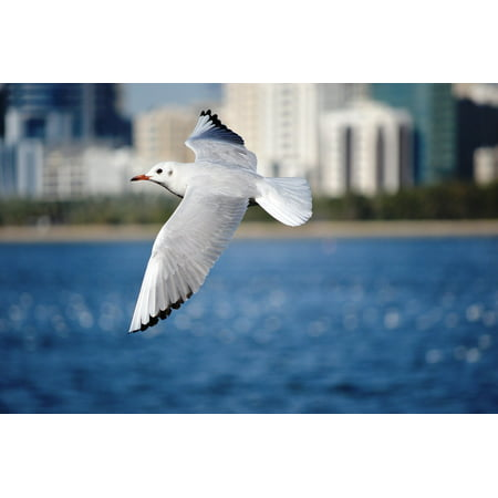 Canvas Print Animal Seagull Seabird Wings Flight Spread Bird Stretched Canvas 10 x 14