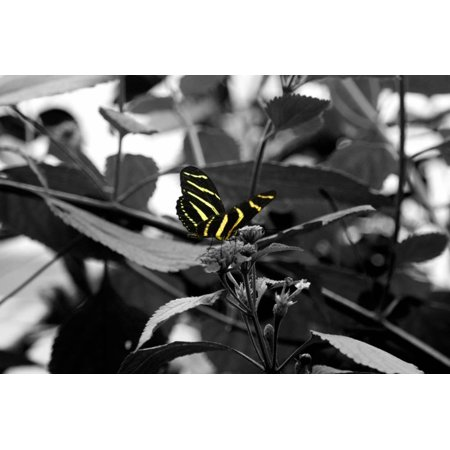 Butterfly at Bronx Zoo Print Wall Art