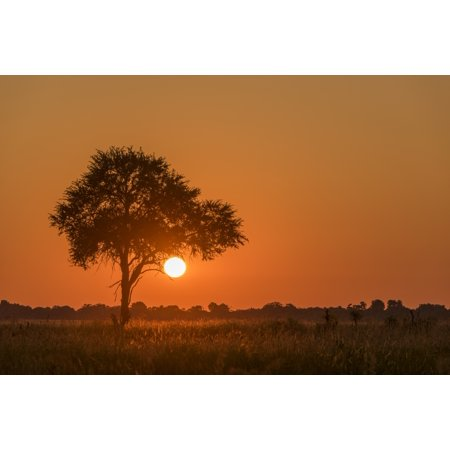 Backlit grass and silhouetted tree at sunset Botswana Canvas Art - Nick  Dale Design Pics (18 x 12)