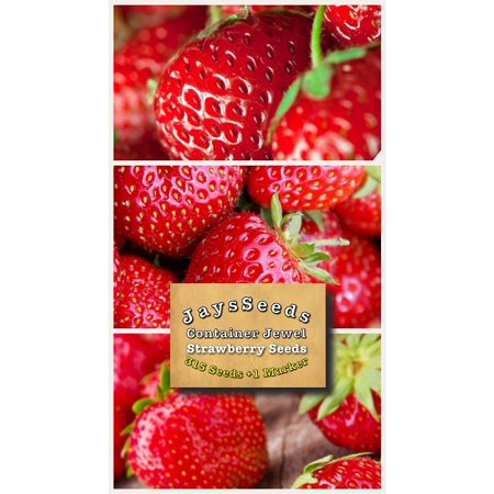 Organic Container Jewel Strawberry 315 Seeds - Strawberry Boxes