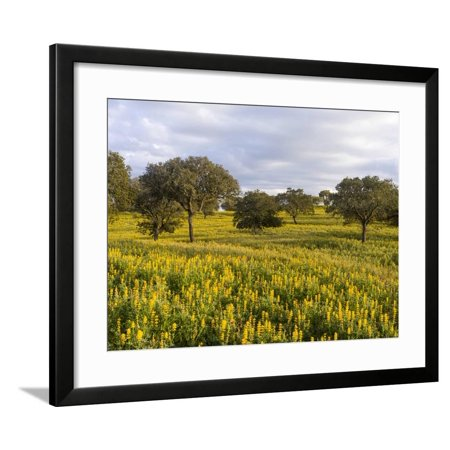 Wildflower meadow, Mertola, Parque Natural do Vale do Guadiana, Portugal, Alentejo Framed Print Wall Art By Martin Zwick