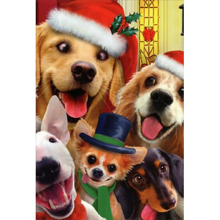 Nobleworks Dogs Making Silly Faces Howard Robinson Humorous / Funny Christmas Card