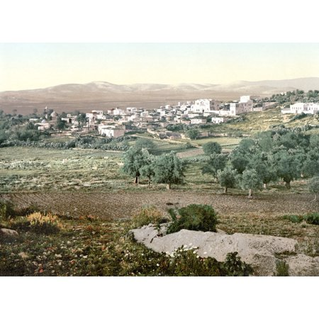 Holy Land Jenin C1895 Nview Of The City Of Jenin West Bank Photochrome C1895 Rolled Canvas Art     24 X 36