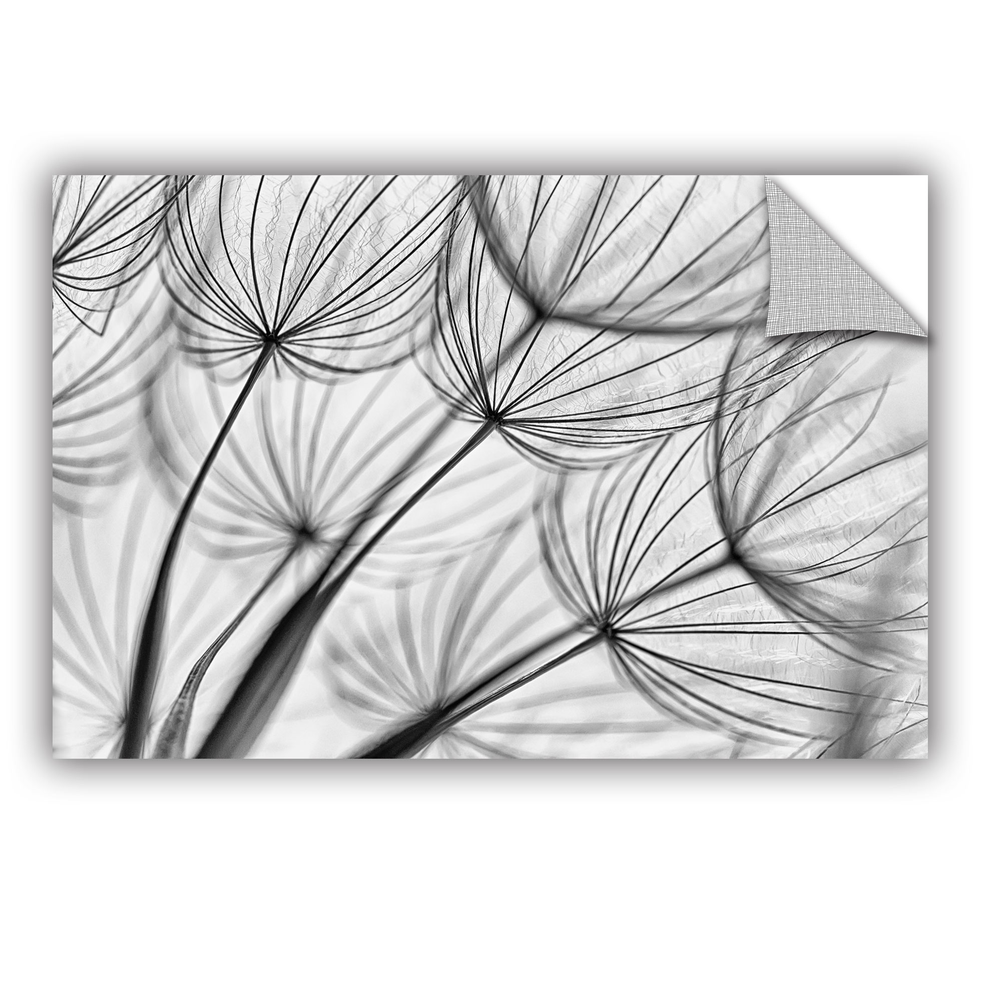 'Parachute Seed II' Removable Wall Art Mural