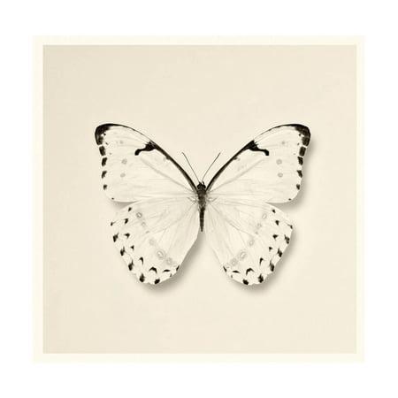 - Butterfly II BW Crop Print Wall Art By Debra Van Swearingen