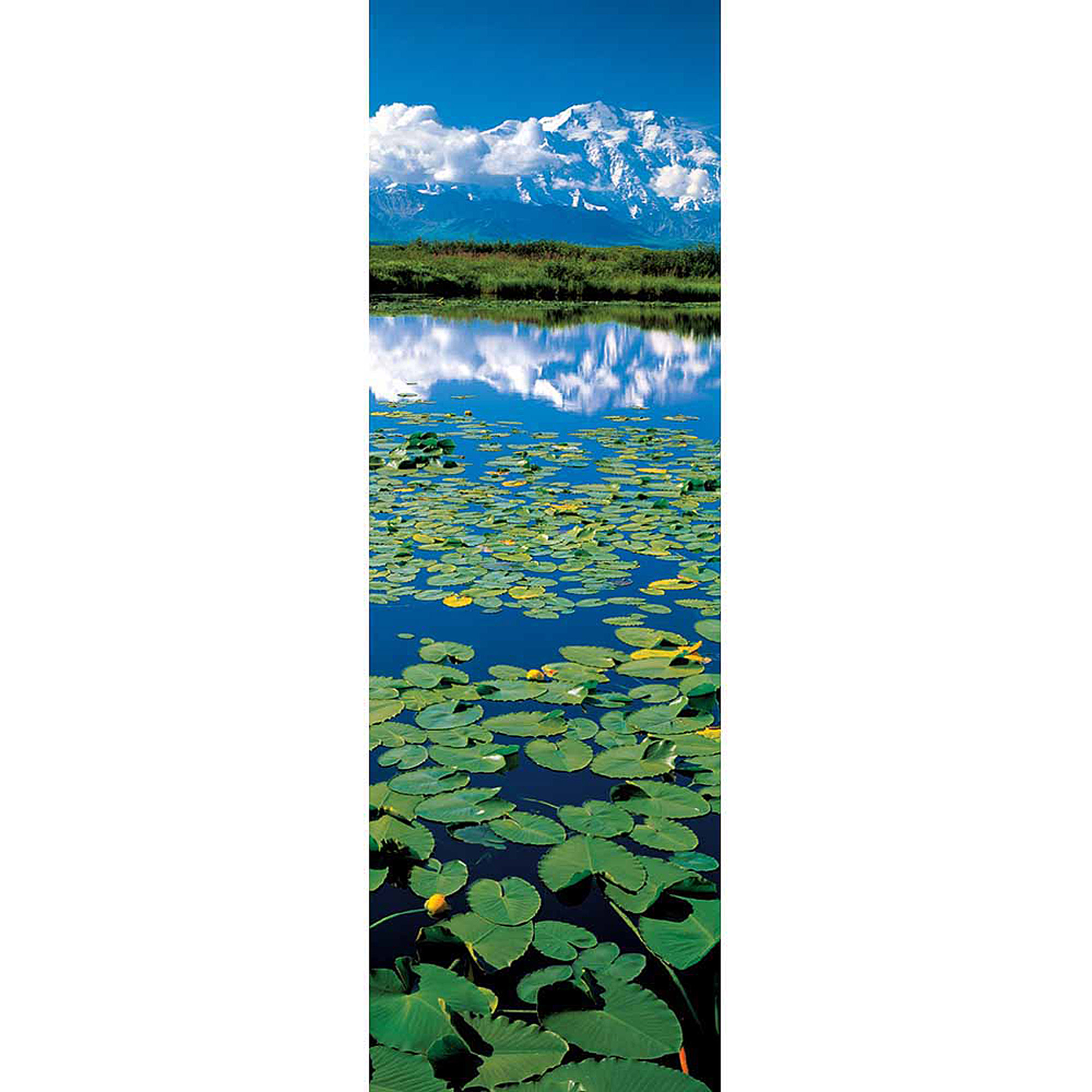 Lake with Waterlilies Photography Art