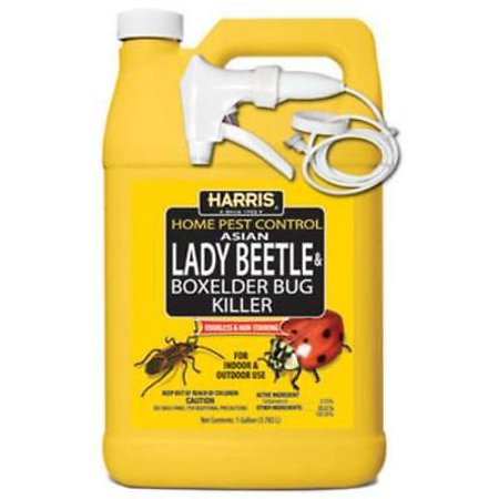 Gallon Ready To Use Asian Lady Beetle & Box Elder Bug Killer