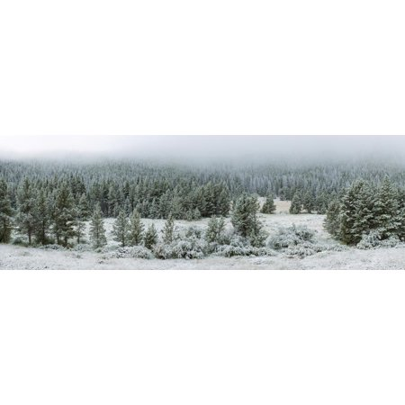 Trees on a snow covered landscape along Trail Ridge Road, Estes Park, Rocky Mountain National Pa... Print Wall Art