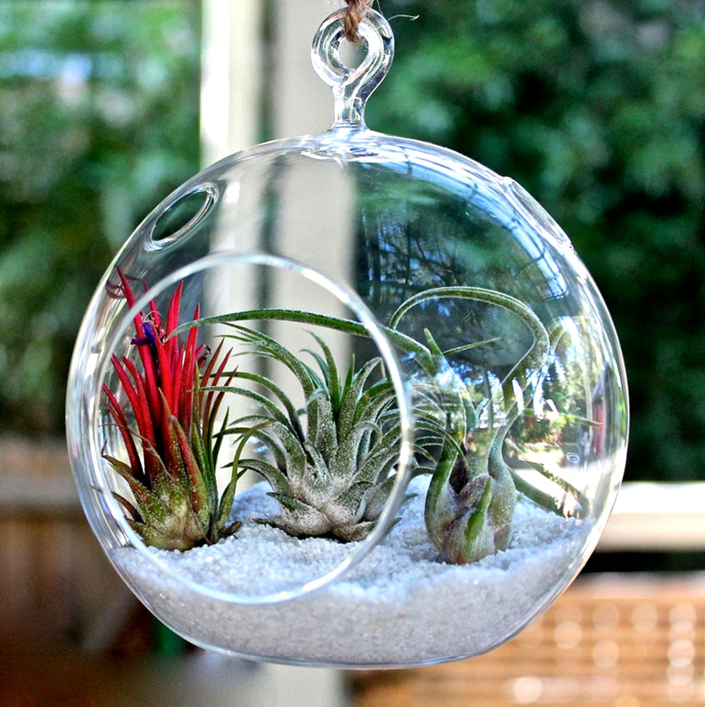 "Efavormart 4 pcs 8"" Diameter Gigantic Globe Glass Terrarium / Decorative Clear Glass Globe"