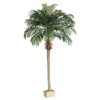 6′ Realistic Artificial Phoenix Palm Tree in Rectangular Plastic Pot