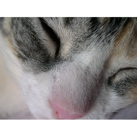 LAMINATED POSTER Gata Dream Face Sleeping Closed Hairy Eyes Rest Poster Print 24 x 36 - Hairy Face Mole