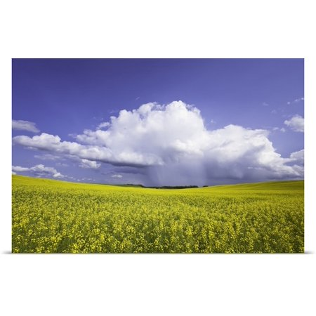 Great Big Canvas Ken Gillespie Poster Print Entitled Rainstorm Over Canola Field Crop  Pembina Valley  Manitoba  Canada