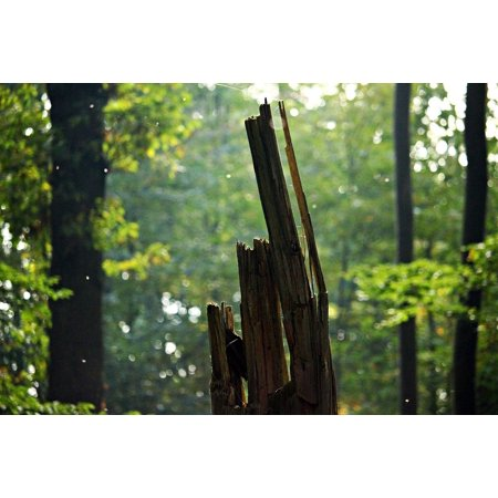 LAMINATED POSTER Tree Stump Dead Wood Mosquitoes Forest Autumn Poster Print 24 x 36