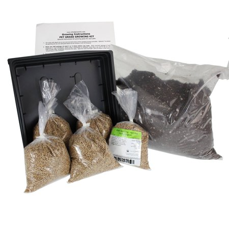 Organic Dog & Cat Wheatgrass Growing Kit for Pet - Dogs Cats & Pets Love To Eat Wheat Grass for Better