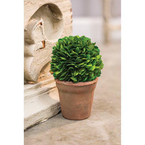 Charlton Home Desktop Boxwood Topiary in Pot