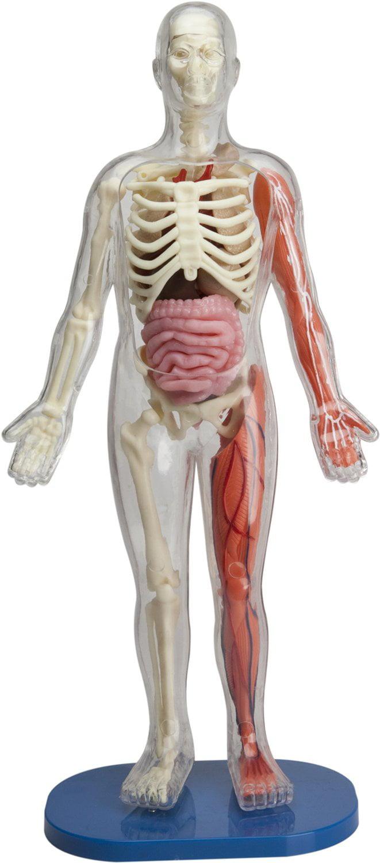 Squishy Human Body By Smartlab Toys Walmart