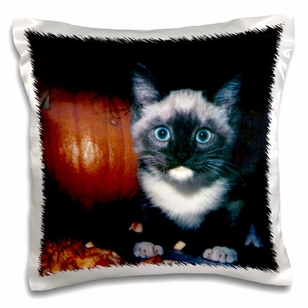 3dRose Kitten and Pumpkin for Halloween - Pillow Case, 16 by 16-inch (Pumpkin And Halloween)