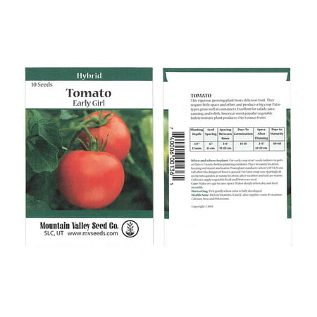 Tomato Garden Seeds - Early Girl Hybrid - 10 Seed Packet - Non-GMO, Vegetable Gardening (Best Hybrid Tomato Seeds In India)