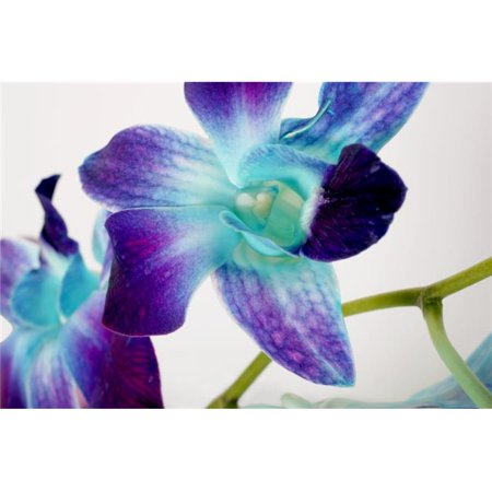 Posterazzi DPI1800838 Flowers On White Background Poster Print by Con Tanasiuk, 17 x 11 - image 1 of 1