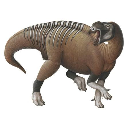 Muttaburrasaurus A Herbivorous Ornithopod Dinosaur From The Early