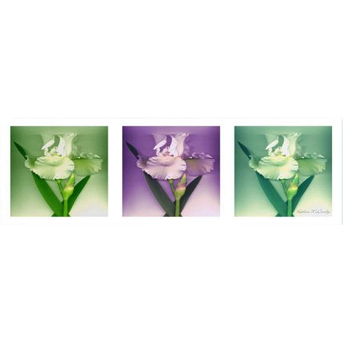 Trademark Art 'Three White Iris' Canvas Art by Kathie McCurdy