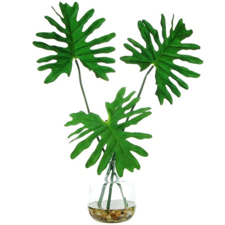 Bay Isle Home Tropical Leaves Desktop Foliage Plant in Clear Glass Vase (Tropical Foliage)