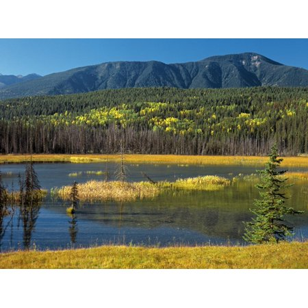 Canada, British Columbia, Yoho National Park. Wapta Marsh and mountain landscape. Print Wall Art By Jaynes (Best National Parks In British Columbia)