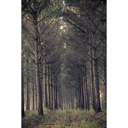 Canvas Print Environment Forest Scary Trees Nature Woods Stretched Canvas 10 x - Scary Trees