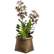 Tori Home Vanda Orchid Plant in Basket