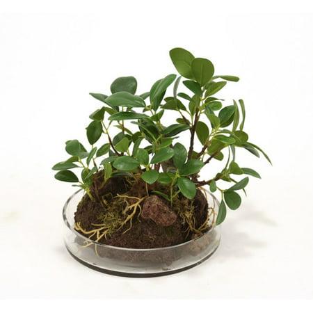 Distinctive Designs Silk Small Ficus Bonzai Tree Garden Floor Plant in Planter