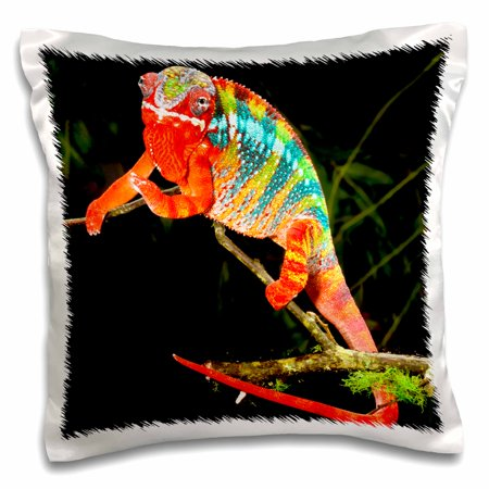 Lizard Pillow (3dRose Rainbow Panther Chameleon, Lizard in Madagascar - NA02 DNO0829 - David Northcott, Pillow Case, 16 by 16-inch )
