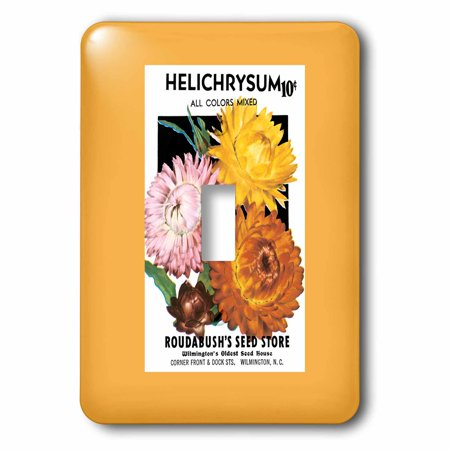 3dRose Helichrysum Mixed Colors Roudabushs Seed Store - Straw Flowers, 2 Plug Outlet (Online Outlets Stores)