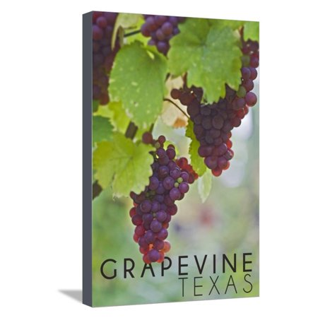 Grapevine, Texas - Wine Grapes on Vine #3 Stretched Canvas Print Wall Art By Lantern