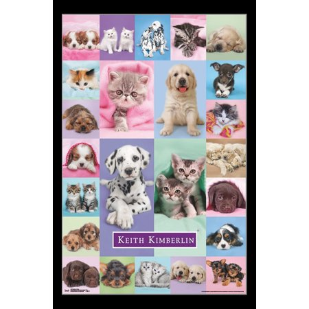 Puppies & Kittens Poster - Puppy Posters