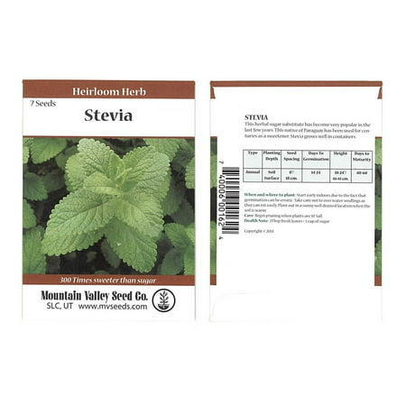 Stevia Sweet Herb Plant Seeds - 7 Seed Packet - Non-GMO, Heirloom Herbal Garden - Planting Pumpkin Seeds From Halloween