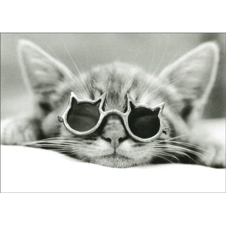 Graphique de France Kool Kat: Cat with Sunglasses David McEnery Birthday Card ()