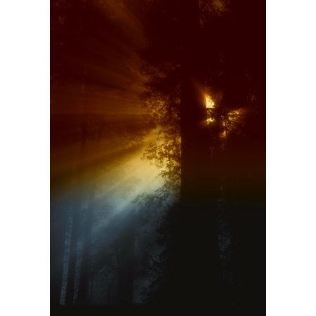 LAMINATED POSTER Light Rays California Trees Forest Sun Sunlight Poster Print 24 x (California Round Ray)