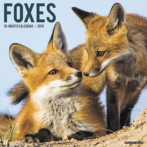 Willow Creek Press 2019 Foxes Wall Calendar