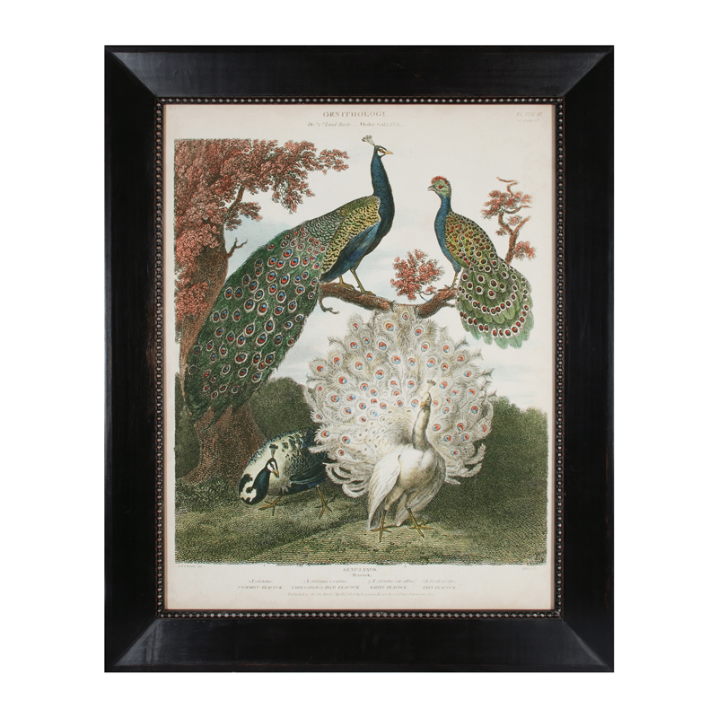 10207-S1 Peacock Gathering - Finish in Antique Black Frame With Silver Beading