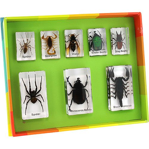 Real Insects Specimen Set 1 8 pieces by