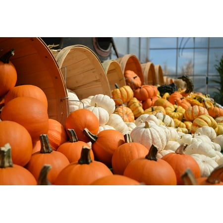 LAMINATED POSTER Halloween Gourds Fall Decoration Orange Autumn Poster Print 24 x 36 - Halloween Painted Gourds Ideas