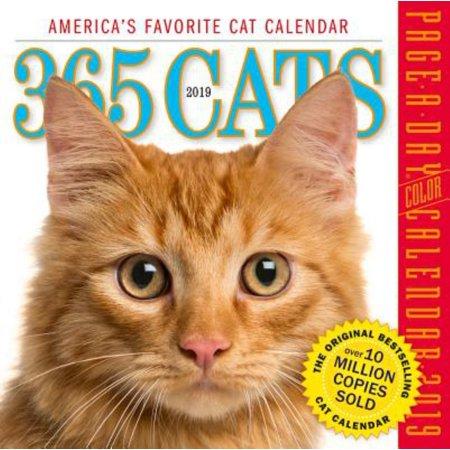 2019 365 CATS BOX CALENDA R