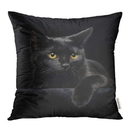 - YWOTA Halloween Black Cat with Yellow Eyes on Face Head Paw Portrait Animal Kitten Pillow Cases Cushion Cover 20x20 inch