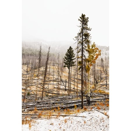 Sawback Burn On Bow Valley Parkway Fire Intentionally Set In 1993 In Effort To Renew Forest And Wildlife Habitat Banff National Park Alberta Stretched Canvas - Ken Gillespie  Design