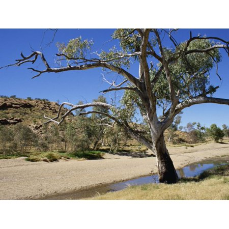 Dry Bed of Todd River, Alice Springs, Northern Territory, Australia, Pacific Print Wall Art By Ken